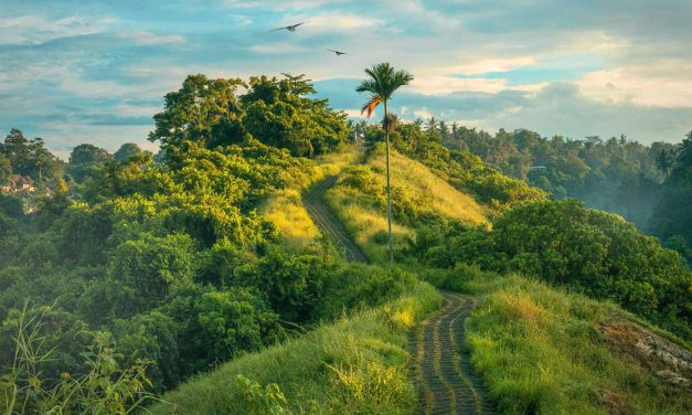 Mysore And Coorg 4 Days Packages